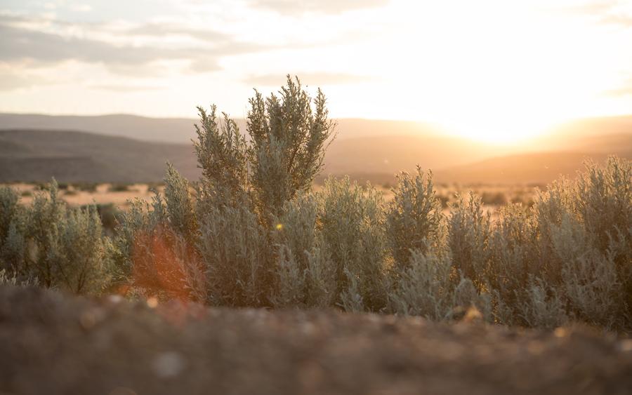 تب عکاسی در طبیعت با وجود شبکه های اجتماعی مانند اینستاگرام بیش از پیش بالا گرفته است. و البته عکسها یادگاری از تجربه های خوب ما در طبیعت هستند. توجه به نکات زیر می تواند باعث شود که زیباییهای کوهستان و سایر جلوه های طبیعت را به خوبی ثبت کرده و آنرا به دیگران انتقال دهید.